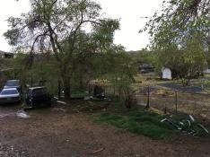 Backyard_swamp.jpg