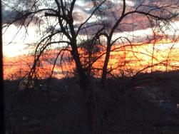 Sunset_tree.jpg